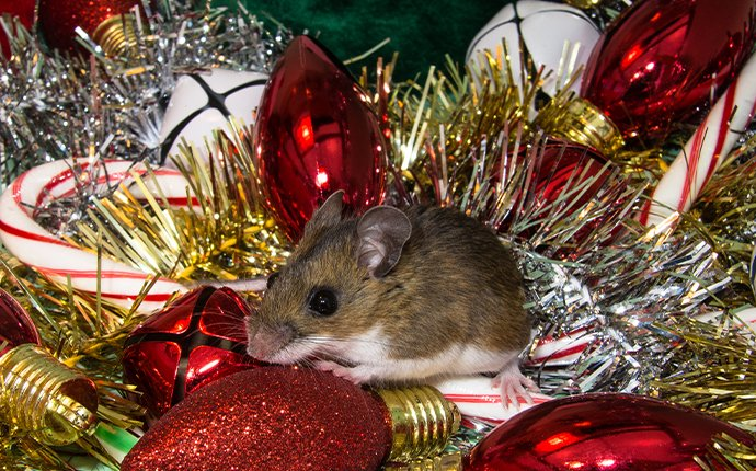 a mouse in christmas decor in idaho falls