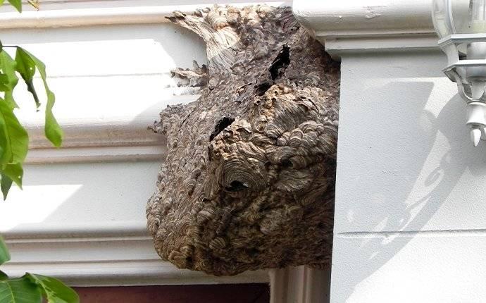 a wasp nest in a doorway