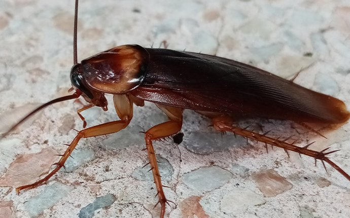 a cockroach on gravel in rigby idaho