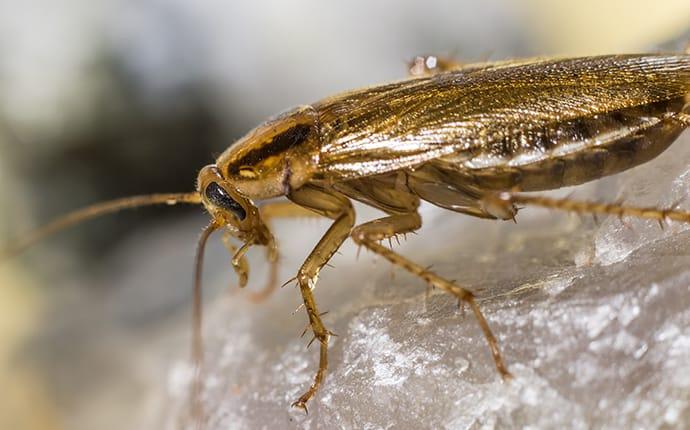 a cockroach on a rock in idaho falls