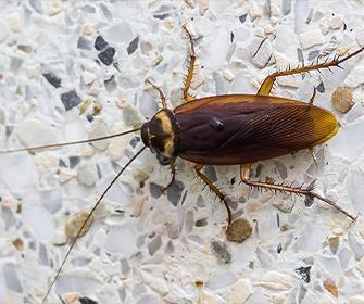 a cockroach on marble in idaho falls