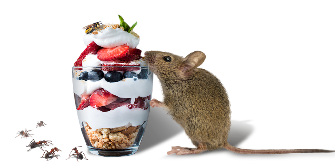 mouse eating a parfait