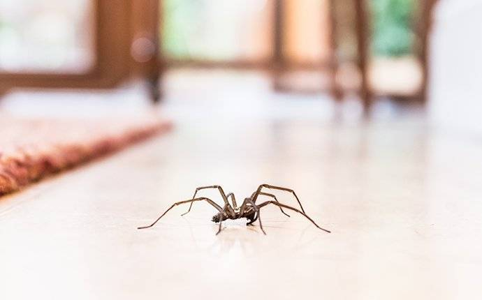spider crawling on living room floor