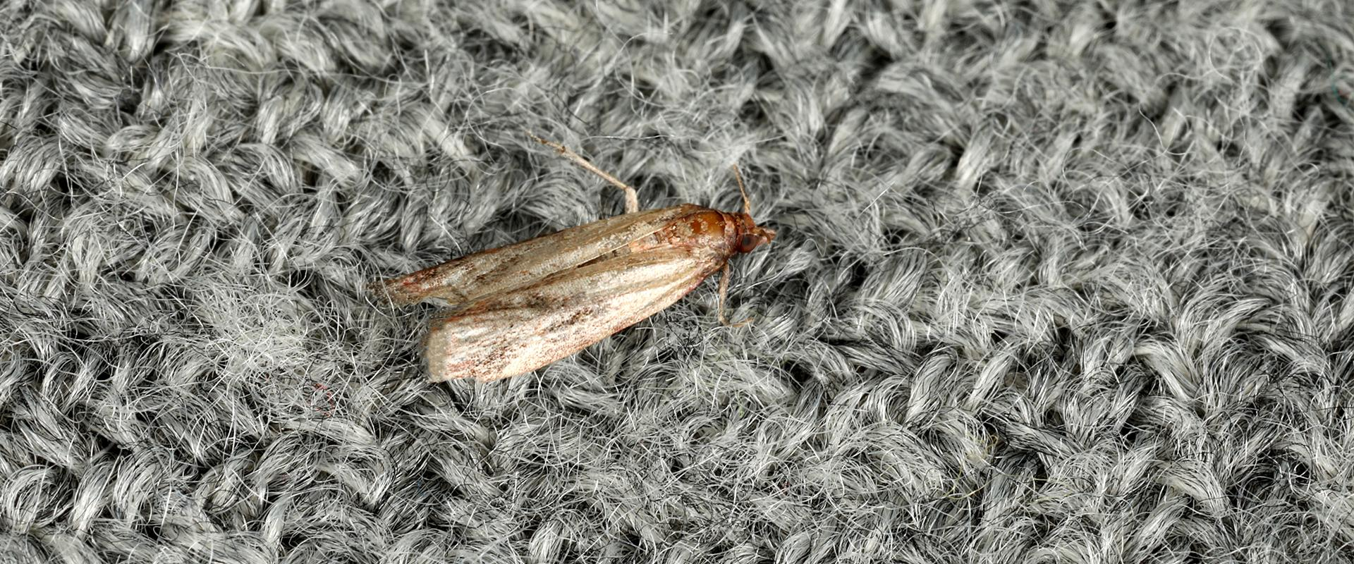 a moth on clothes in idaho falls