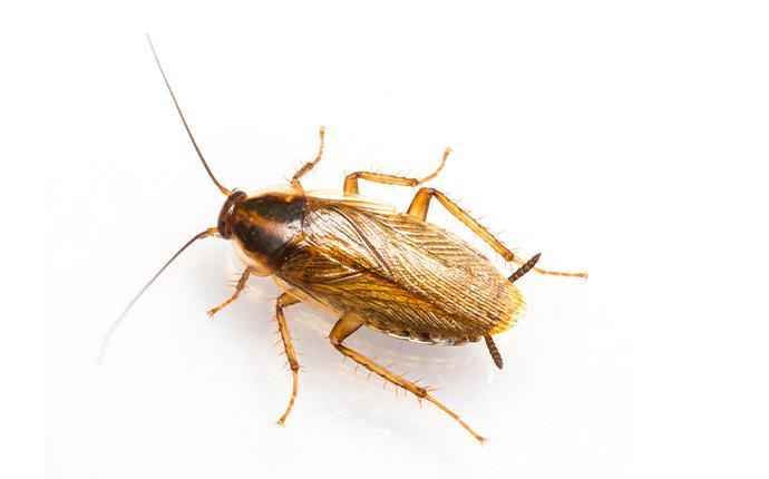 a cockroach in idaho falls