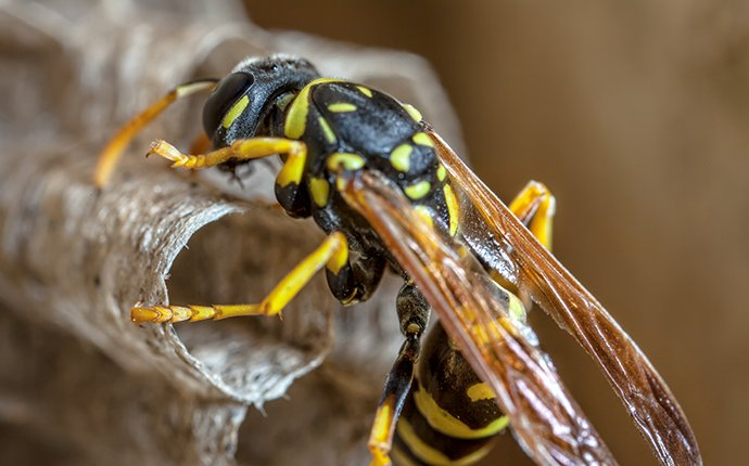 a wasp on its nest in idaho falls