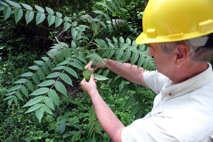bay area arborist assessing tree