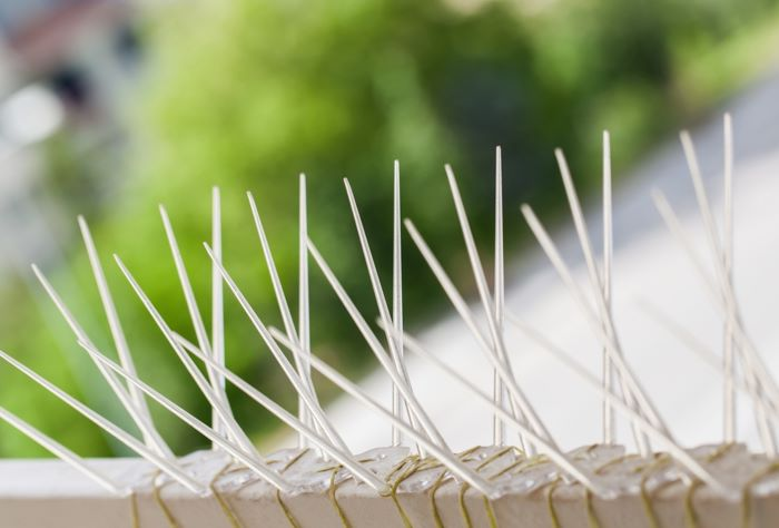 bird control spikes