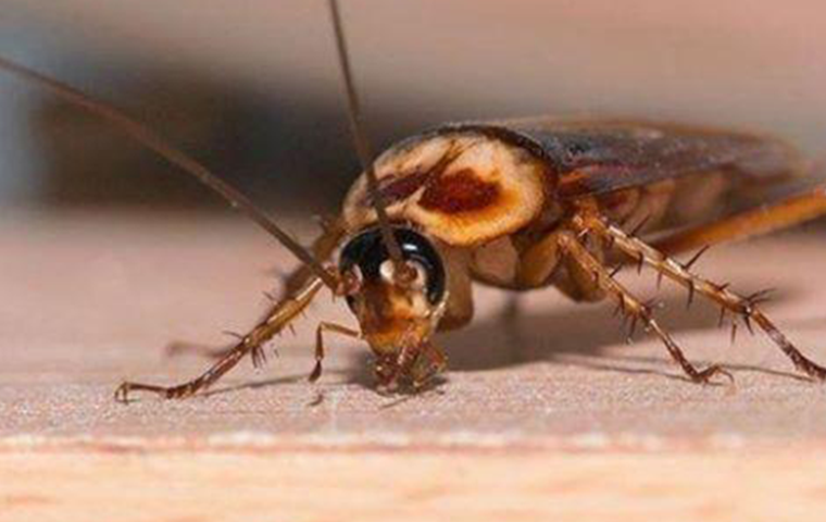 bugs in summer