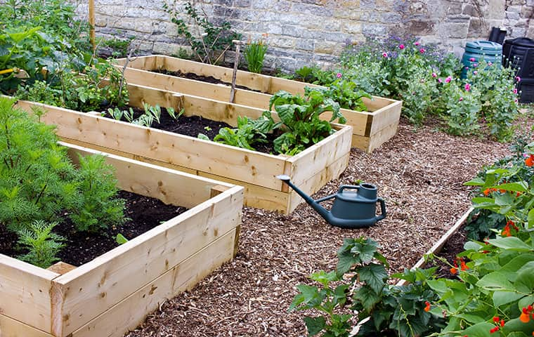a raised bed in a california bay area residential garden