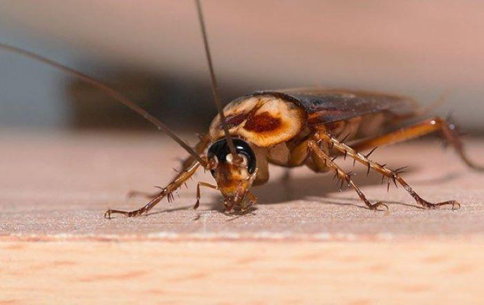 how to get rid of roaches in house