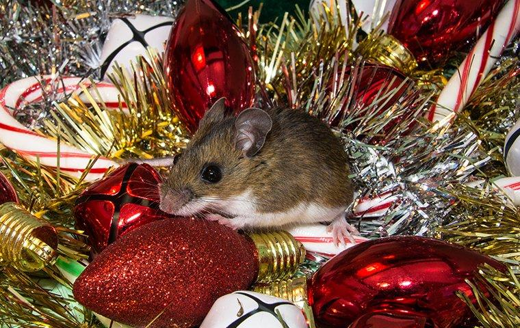 mouse in holiday decorations