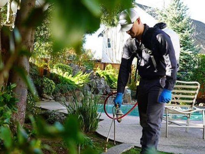 smiths pest control technician spraying for pests