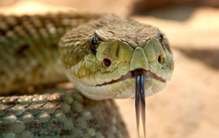 how to get rid of snakes