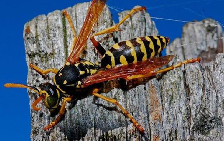 wasp flying onto tree