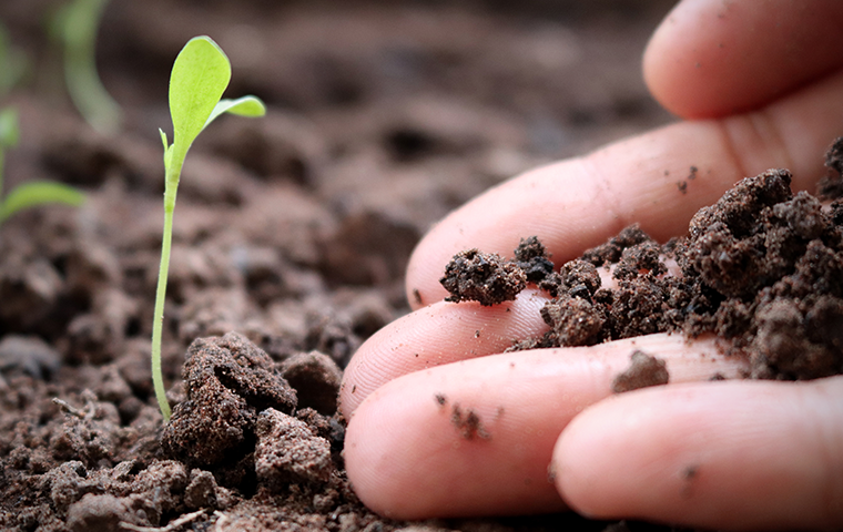 healthy soil in person's hand