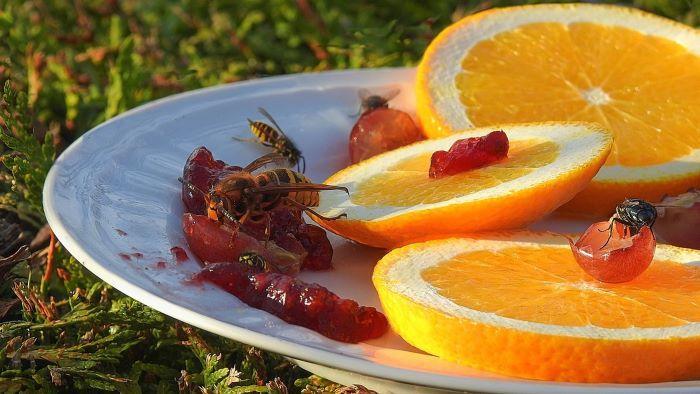get rid of wasps in garden