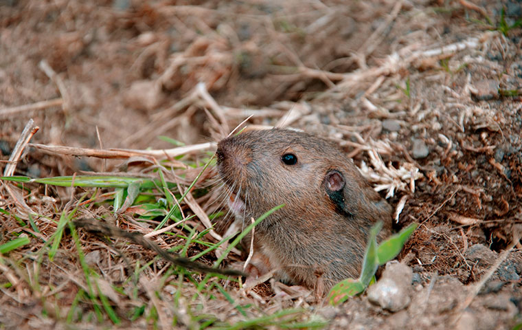 gopher in gopher hole
