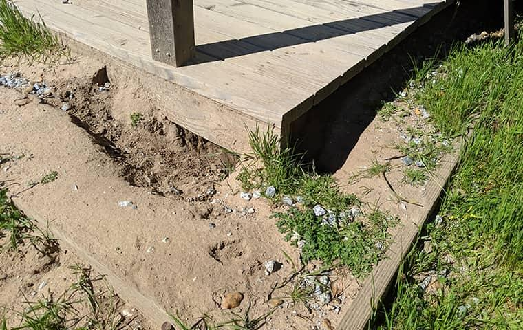damage caused by ground squirrels in oakland ca