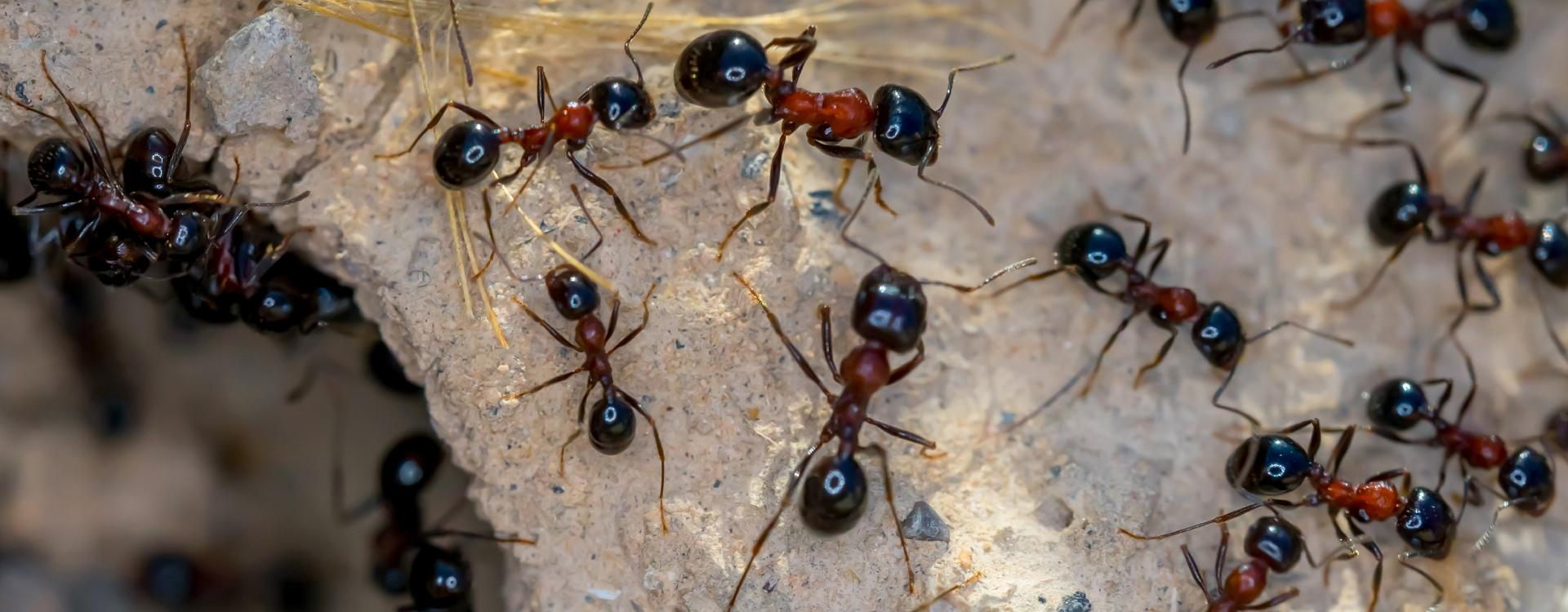 ants swarming around a hole
