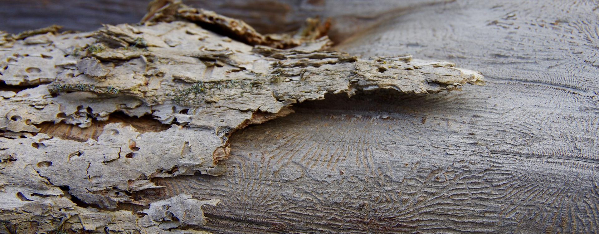 tree bark with disease