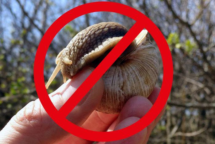 keep snails away tips