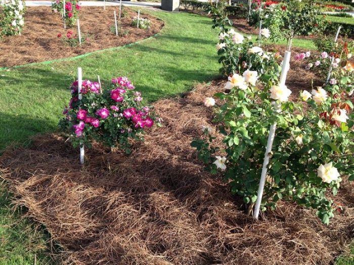 killing weed method mulch