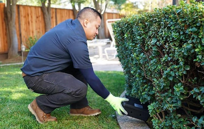 mouse exterminator in the bay area