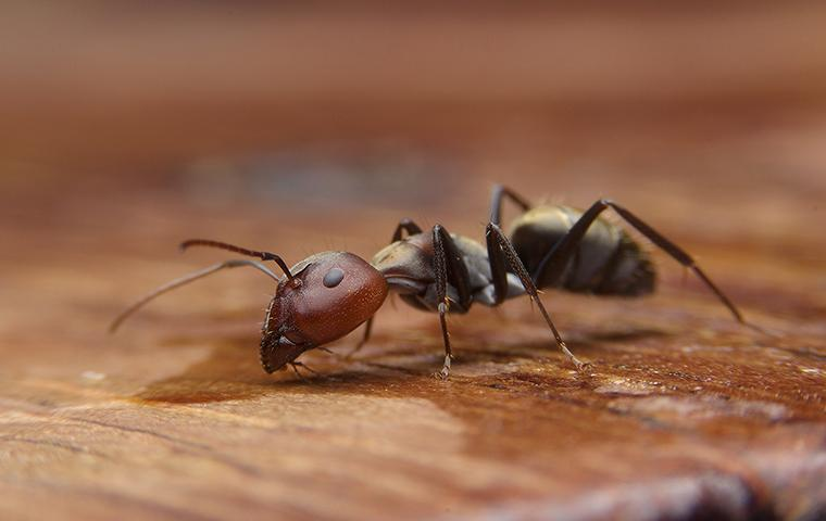 an ant drinking