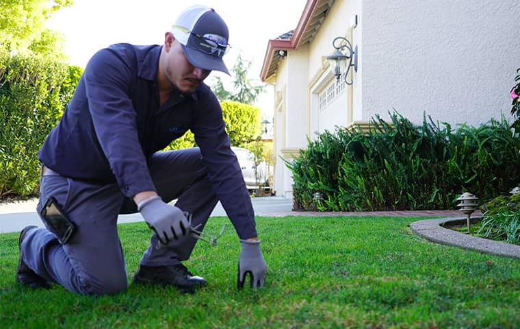 smiths gopher trapping service setting traps outside of a home in san jose california