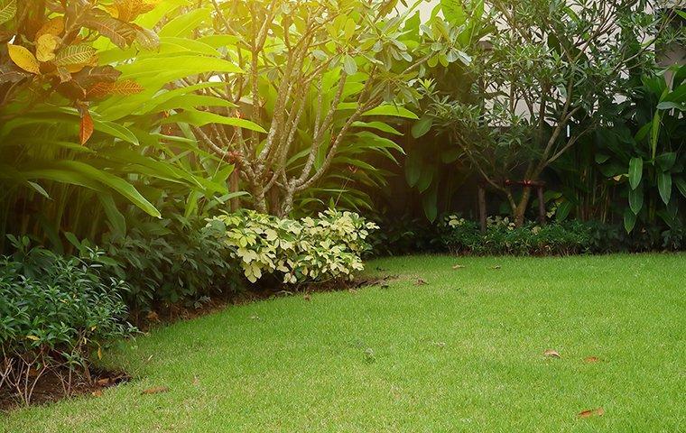 plants outside home