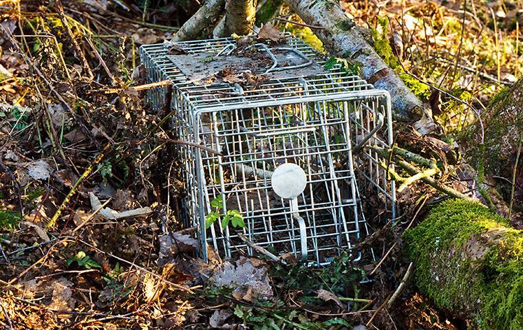 wildlife live trap