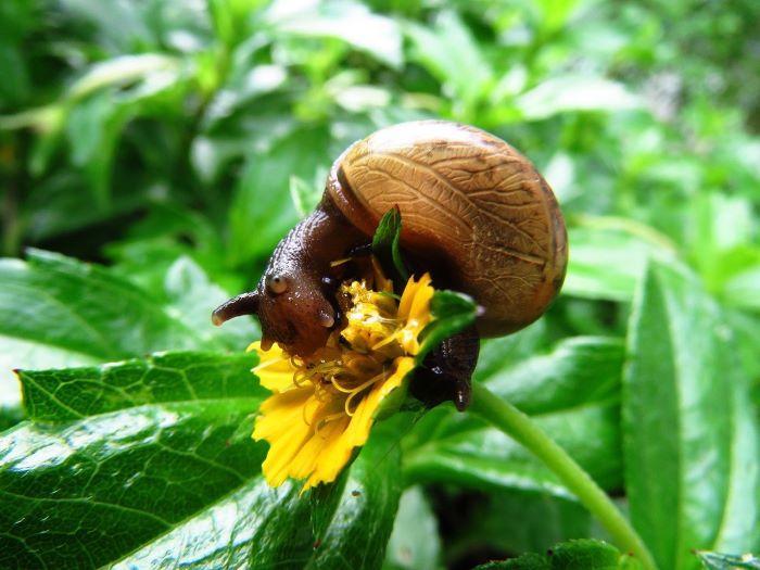 snail eating in yard