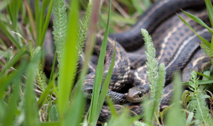 snake in garden and yard