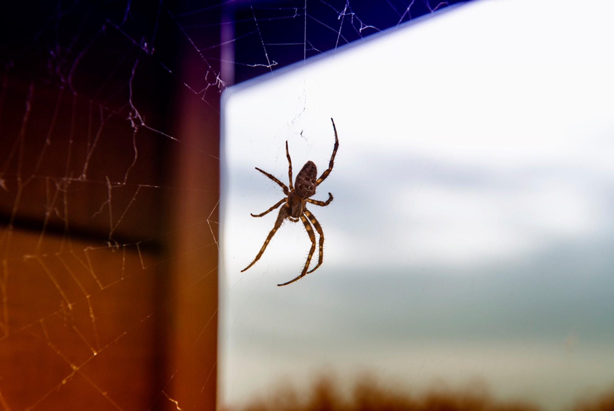 spider in apartment