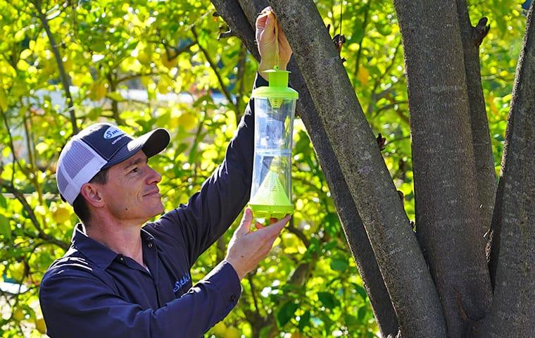 smiths gopher trapping service technician setting up a stinging insect trap in a tree in fremont california