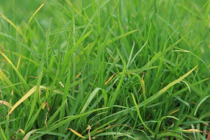 tall grass weed free