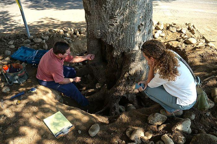 tree care specialist bay area