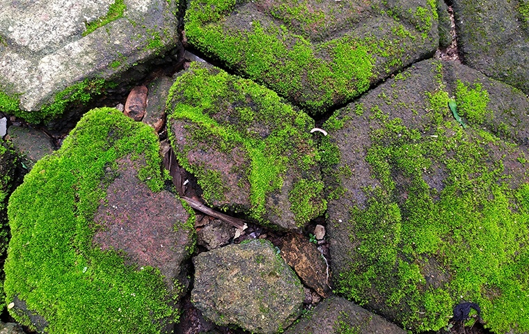 stepping stones overgrown with moss