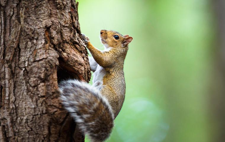 squirrel climbing on side of tree
