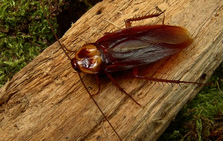 a cockroach crawling on a log outside of a home in bucyrus kansas