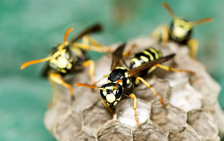a swarm of wasps crawling on a hive outside of a edgerton kansas
