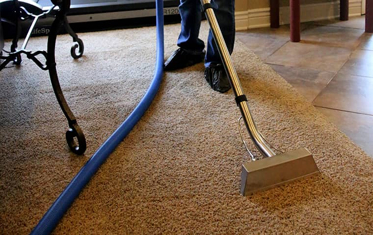 augustine exterminators professional carpet cleaning services in kansas city