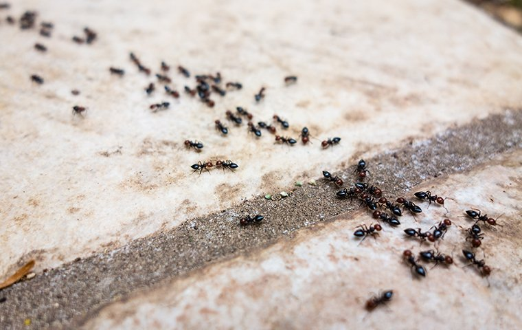 many ants crawling on a patio outside of a home in fairfield connecticut