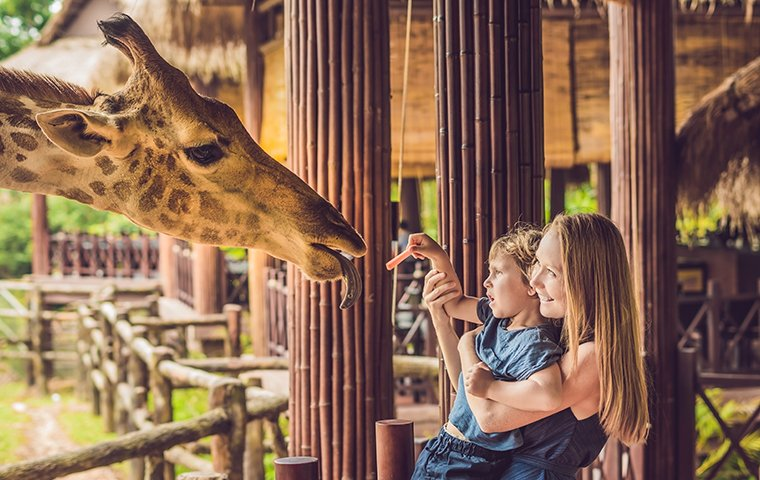 a mother and child feeding a giraffe at a zoo in goshen connecticut