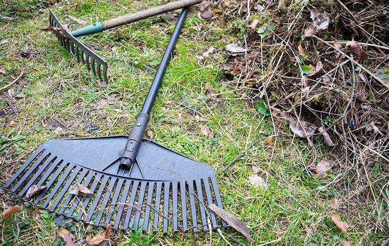 yard clean up for pest prevention