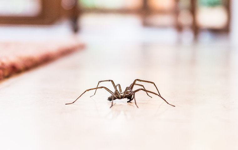 a house spider crawling on the floor