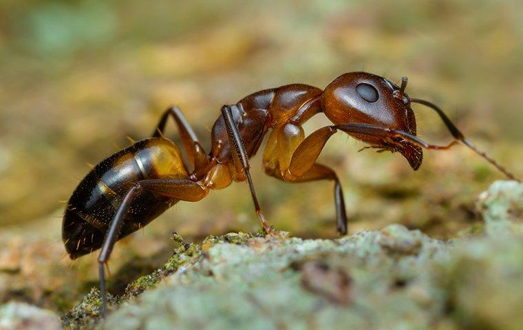 an ant crawling on the ground