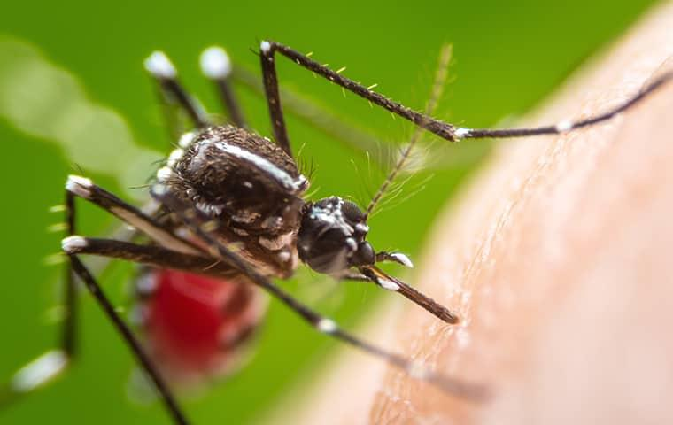 a mosquito perched on a gilbert arazona resident as he rests in his backyard on a sunny summer day