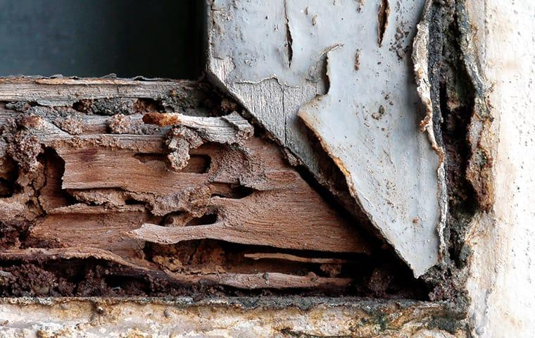 termite damage on wood of home